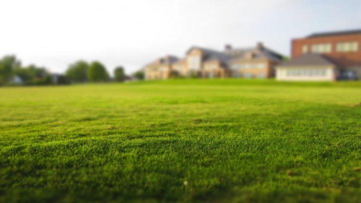 Czy warto korzystać z usług ogrodniczych?
